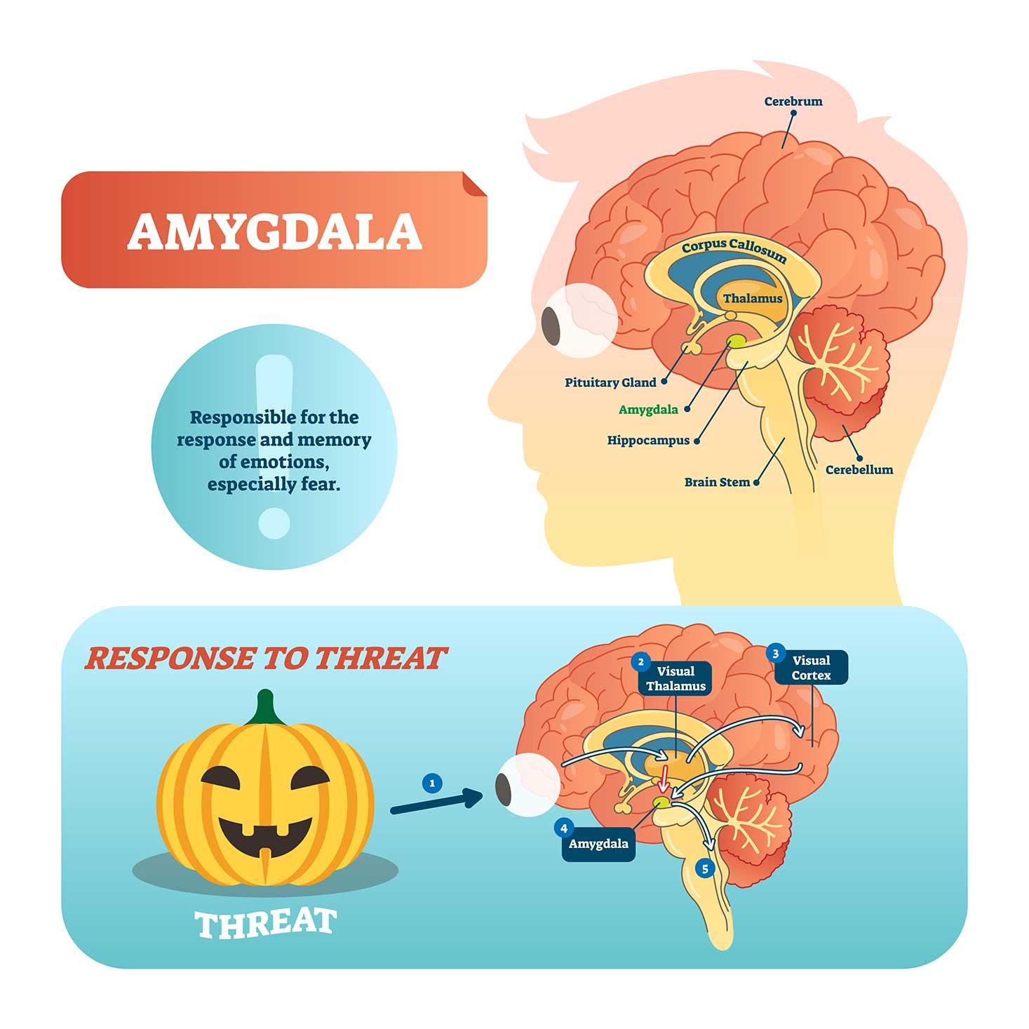 ストレスに反応する脳の部位は?